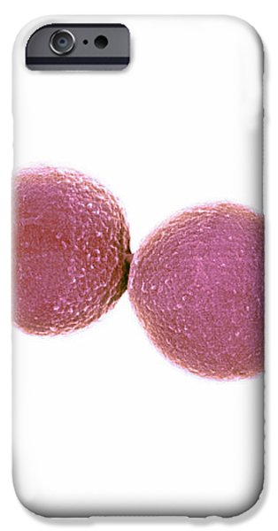 Staphylococcus Aureus Bacteria, Sem iPhone Case by