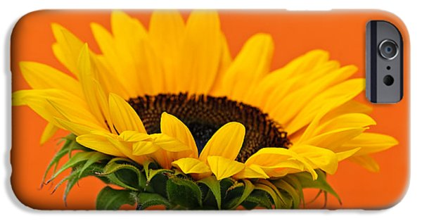 Botanical Photographs iPhone Cases - Sunflower closeup iPhone Case by Elena Elisseeva