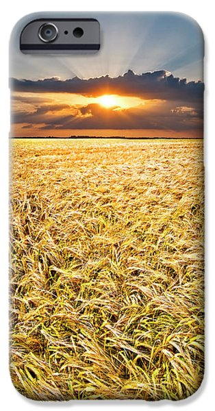 Field. Cloud iPhone Cases - Sunset Wheat iPhone Case by Meirion Matthias