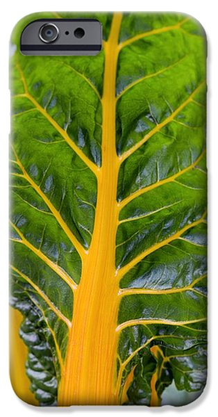 Swiss Chard iPhone Cases - Swiss Chard bright Yellow iPhone Case by Jon Stokes