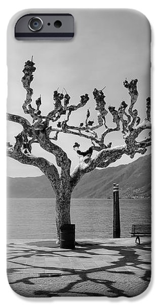 sycamore trees in Ascona - Ticino iPhone Case by Joana Kruse