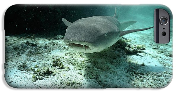 Fish Photographs iPhone Cases - Tawny Nurse Shark Nebrius Ferrugineus iPhone Case by Mike Parry