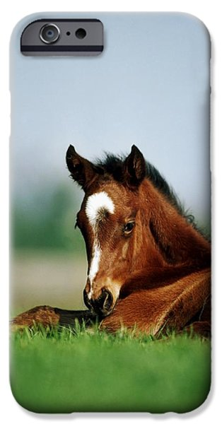 The Horse iPhone Cases - Thoroughbred Foal, Ireland iPhone Case by The Irish Image Collection