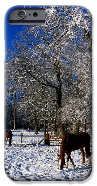 Fed iPhone Cases - Thoroughbred Horses, Mares In Snow iPhone Case by The Irish Image Collection