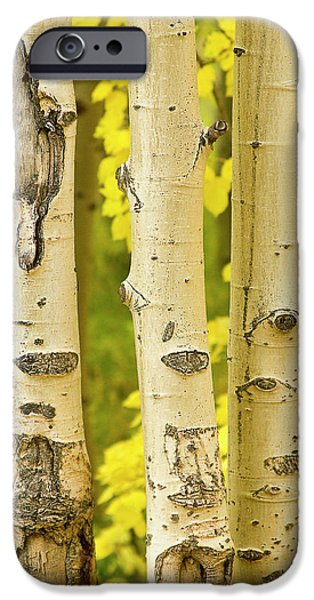 Three Autumn Aspens iPhone Case by James BO  Insogna