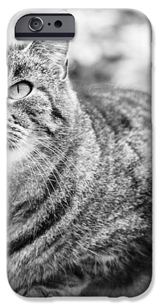 Tomcat iPhone Case by Frank Tschakert