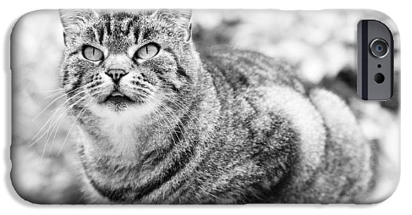 Concentration iPhone Cases - Tomcat iPhone Case by Frank Tschakert