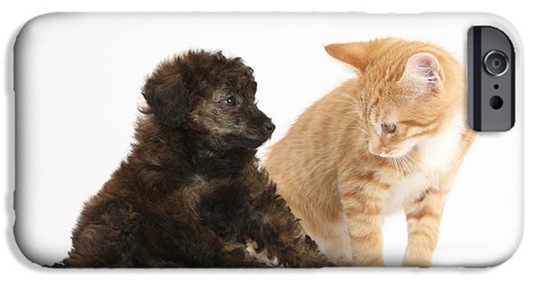 Dog And Toy iPhone Cases - Toy Poodle Puppy With Kitten iPhone Case by Mark Taylor