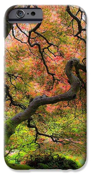 Tree of Beauty iPhone Case by Steve McKinzie