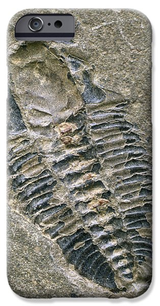 Palaeontology iPhone Cases - Trilobite Fossil iPhone Case by Alan Sirulnikoff