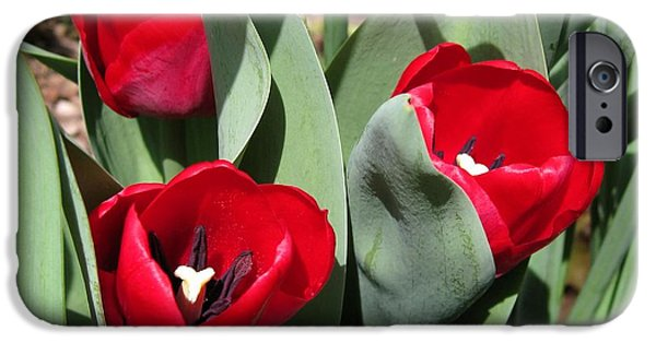 Snake iPhone Cases - Triumph Tulip named Ile de France iPhone Case by J McCombie