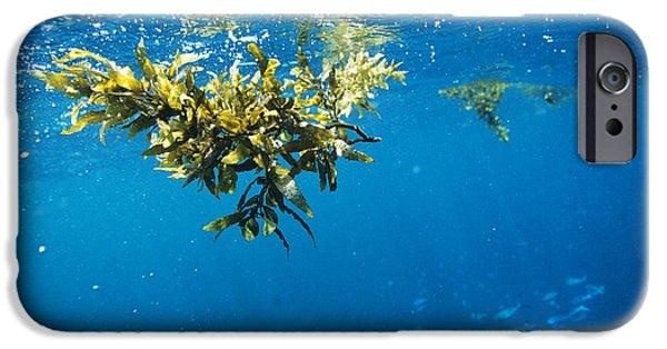 Alga iPhone Cases - Tropical Seaweed iPhone Case by Alexis Rosenfeld