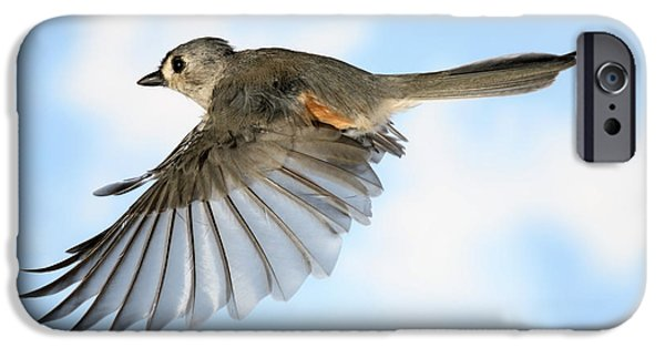 Titmouse iPhone Cases - Tufted Titmouse In Flight iPhone Case by Ted Kinsman