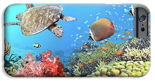 Caribbean iPhone Cases - Underwater panorama iPhone Case by MotHaiBaPhoto Prints
