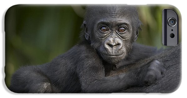 Gorilla iPhone Cases - Western Lowland Gorilla Gorilla Gorilla iPhone Case by San Diego Zoo