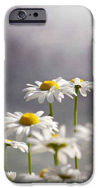 Botanical Photographs iPhone Cases - White Daisies iPhone Case by Carlos Caetano