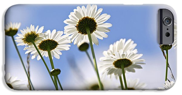 Meadow Photographs iPhone Cases - White daisies iPhone Case by Elena Elisseeva