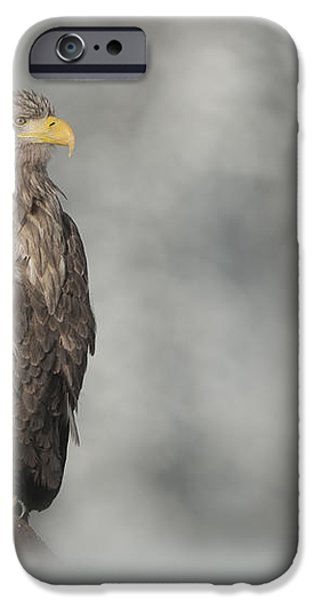 White-tailed Eagle iPhone Case by Andy Astbury