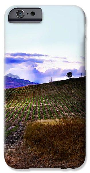 Wine Vineyard in Sicily iPhone Case by Madeline Ellis