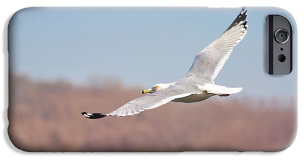 Flying Seagull iPhone Cases - Wingspan iPhone Case by Bill Cannon