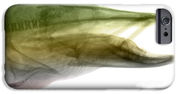 Muskie iPhone Cases - X-ray Of Muskie iPhone Case by Ted Kinsman
