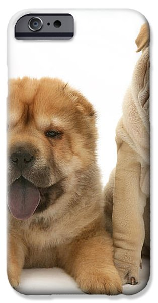 Young Dogs iPhone Case by Jane Burton