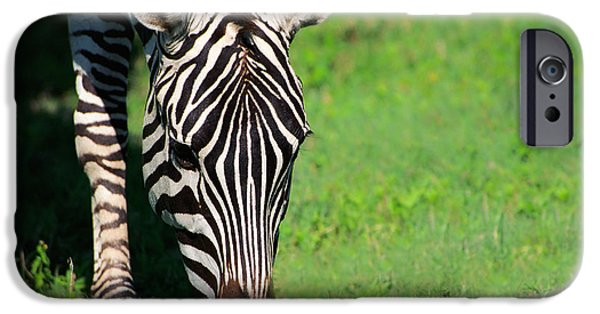 Africa Photographs iPhone Cases - Zebra iPhone Case by Sebastian Musial