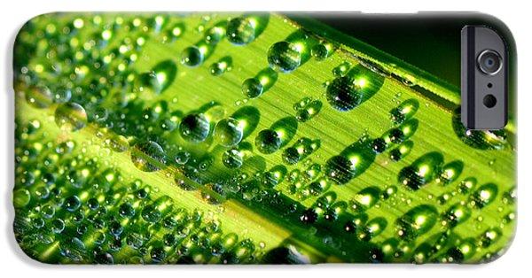 Lemon Drops iPhone Cases - Dewdrops on Lemongrass iPhone Case by Thomas R Fletcher