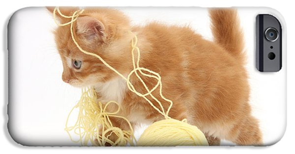 Housecat iPhone Cases - Ginger Kitten iPhone Case by Mark Taylor
