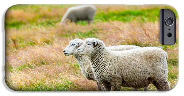 Pastureland iPhone Cases - Sheeps iPhone Case by MotHaiBaPhoto Prints
