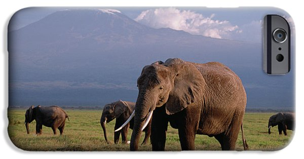 Recently Sold -  - Animals Photographs iPhone Cases - African Elephant Loxodonta Africana iPhone Case by Gerry Ellis