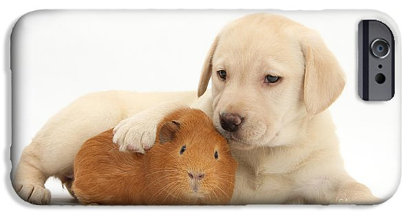 Mixed Labrador Retriever iPhone Cases - Puppy And Guinea Pig iPhone Case by Mark Taylor