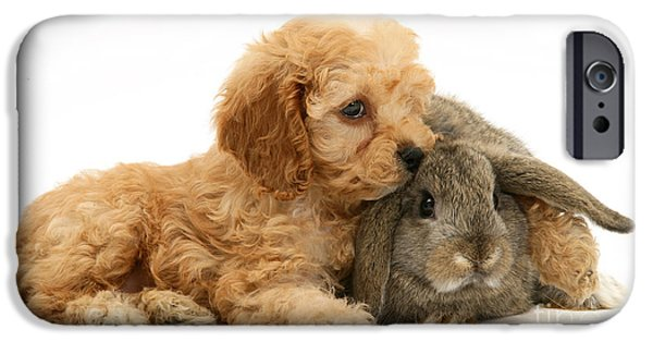 Puppies iPhone Cases - Puppy And Rabbit iPhone Case by Mark Taylor