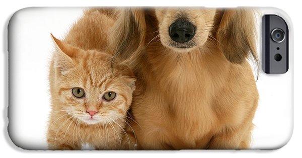 Dachshund Puppy iPhone Cases - Kitten And Puppy iPhone Case by Jane Burton