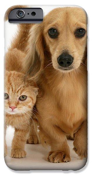 Kitten And Puppy iPhone Case by Jane Burton