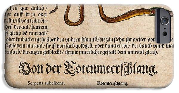 Serpent iPhone Cases - 1558 Gessner Baby Sea Serpent Or Eel iPhone Case by Paul D Stewart