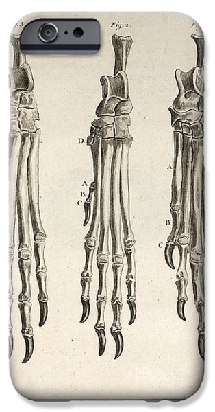 Mastif iPhone Cases - 1755 Variation Dog Feet Buffon Evolution iPhone Case by Paul D Stewart