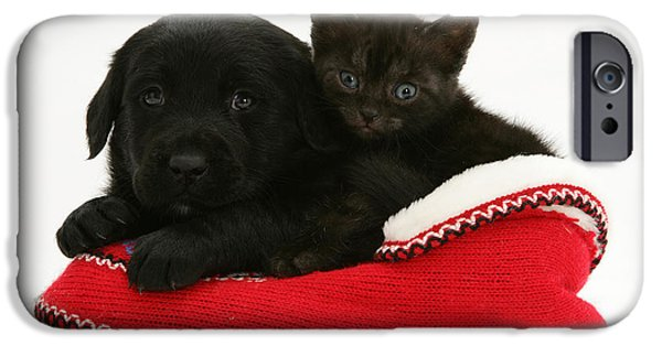 Mixed Labrador Retriever Photographs iPhone Cases - Kitten And Pup iPhone Case by Jane Burton