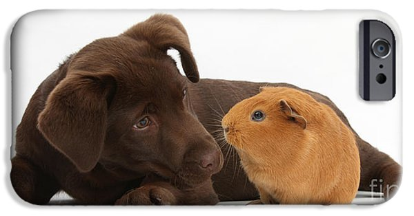 Chocolate Lab iPhone Cases - Puppy And Guinea Pig iPhone Case by Mark Taylor