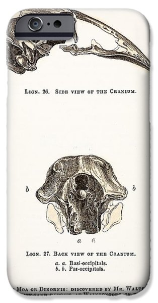 Moa iPhone Cases - 1851 Dinornis Moa Skull Discovery iPhone Case by Paul D Stewart