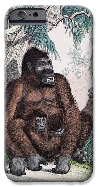 First Family iPhone Cases - 1853 Possible First Gorilla Illustration iPhone Case by Paul D Stewart