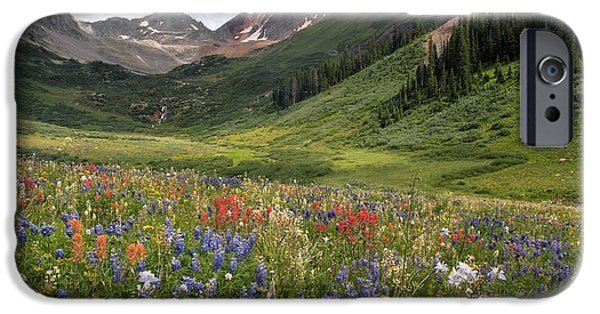 Columbine iPhone Cases - Alpine Flowers In Rustlers Gulch, Usa iPhone Case by Bob Gibbons