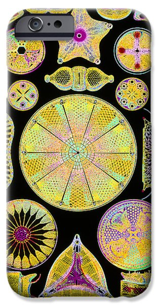 Phytoplankton iPhone Cases - Art Of Diatom Algae (from Ernst Haeckel) iPhone Case by Mehau Kulyk