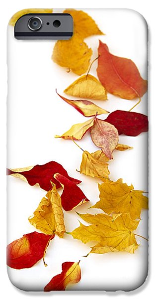 Autumn iPhone Cases - Autumn leaves iPhone Case by Elena Elisseeva