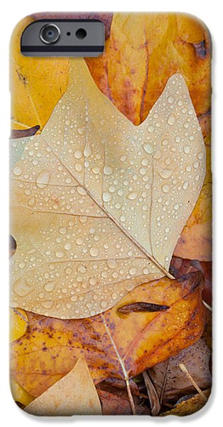 autumn leaves iPhone Case by Hans Engbers