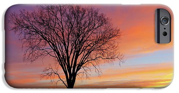 States iPhone Cases - Bare Trees at Dawn iPhone Case by Dean Pennala