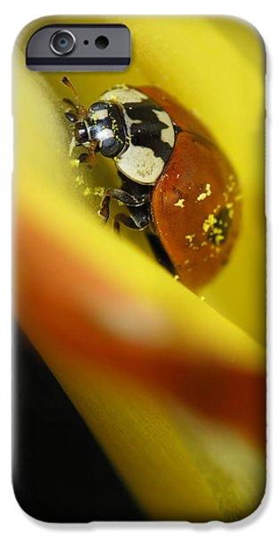 Beetle iPhone Case by Igor Sinitsyn