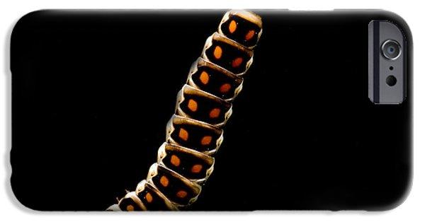 Fauna iPhone Cases - Bioluminescent Railroad Worm iPhone Case by Danté Fenolio