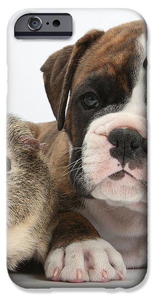 Boxer Puppy And Guinea Pig iPhone Case by Mark Taylor
