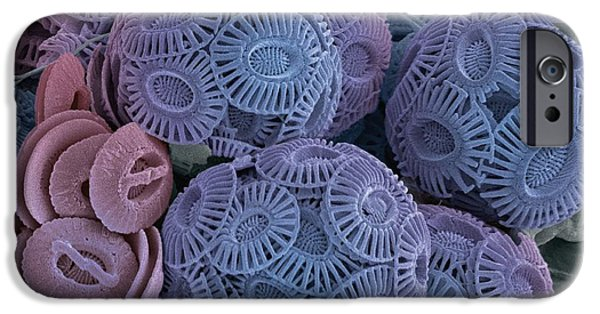 Calcareous Phytoplankton Photographs iPhone Cases - Calcareous Phytoplankton, Sem iPhone Case by Steve Gschmeissner